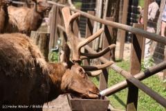 Wildpark-Lueneburg-230510-IMG_1492