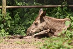 Wildpark-Lueneburg-230510-IMG_1515