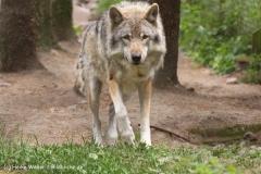 Wildpark-Lueneburg-230510-IMG_1558