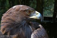 Wildpark_Lueneburger_Heide_050917_IMG_09509_0409
