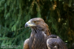 Wildpark_Lueneburger_Heide_050917_IMG_09510