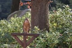 Wildpark_Lueneburger_Heide_050917_IMG_09532