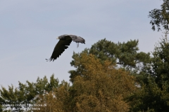 Wildpark_Lueneburger_Heide_050917_IMG_09539