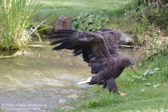 Wildpark_Lueneburger_Heide_050917_IMG_09596