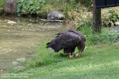 Wildpark_Lueneburger_Heide_050917_IMG_09602