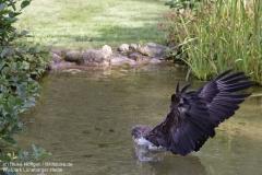 Wildpark_Lueneburger_Heide_050917_IMG_09614