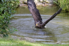 Wildpark_Lueneburger_Heide_050917_IMG_09621