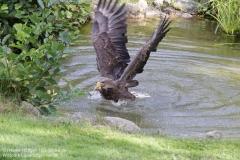 Wildpark_Lueneburger_Heide_050917_IMG_09626