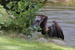 Wildpark_Lueneburger_Heide_050917_IMG_09627