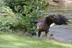 Wildpark_Lueneburger_Heide_050917_IMG_09632
