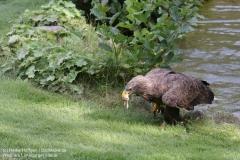 Wildpark_Lueneburger_Heide_050917_IMG_09633