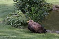 Wildpark_Lueneburger_Heide_050917_IMG_09641