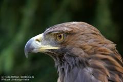 Wildpark_Lueneburger_Heide_050917_IMG_09513