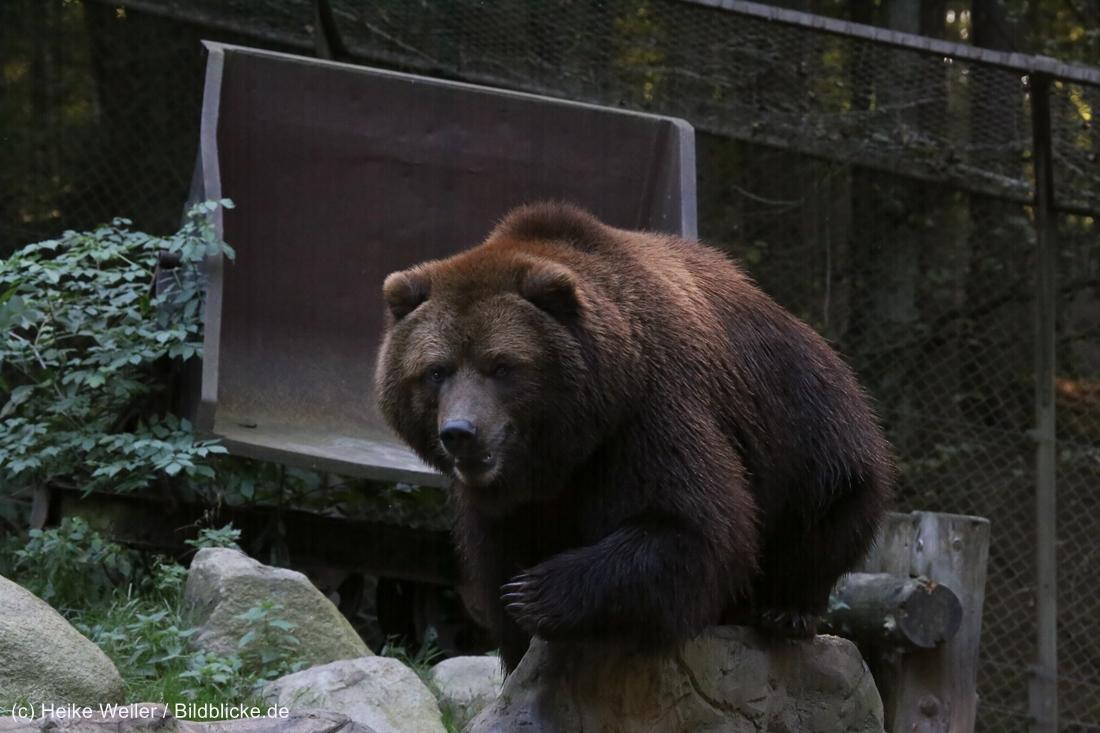 Wildpark_Lueneburger_Heide_270916_IMG_1642