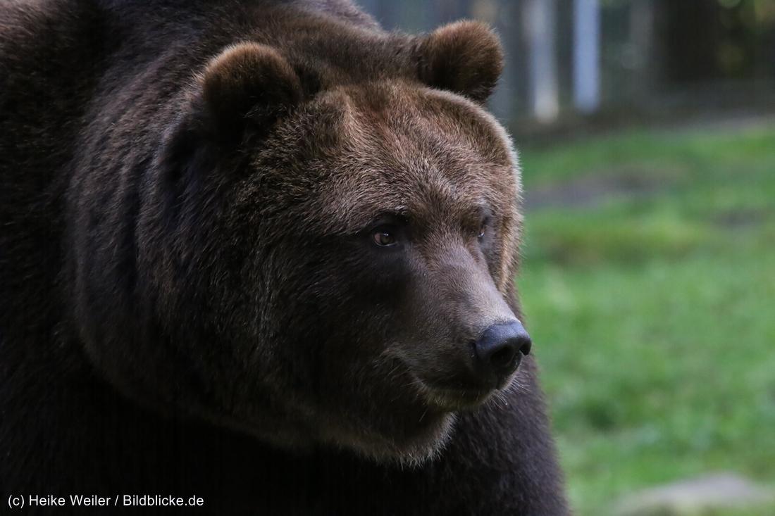 Wildpark_Lueneburger_Heide_270916_IMG_1655