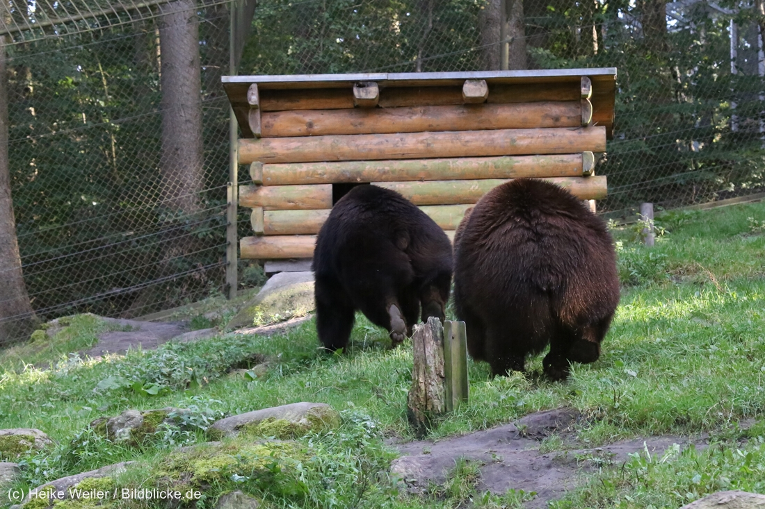 Wildpark_Lueneburger_Heide_270916_IMG_1673