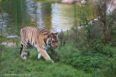 Wildpark_Lueneburger_Heide_270916_IMG_1229