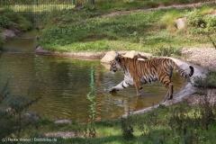 Wildpark_Lueneburger_Heide_270916_IMG_1267