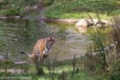 Wildpark_Lueneburger_Heide_270916_IMG_1327