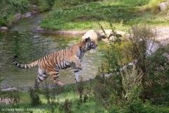Wildpark_Lueneburger_Heide_270916_IMG_1330