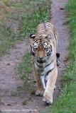 Wildpark_Lueneburger_Heide_270916_IMG_1347