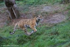 Wildpark_Lueneburger_Heide_270916_IMG_1375