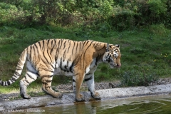 Wildpark_Lueneburger_Heide_270916_IMG_1424