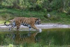 Wildpark_Lueneburger_Heide_270916_IMG_1480