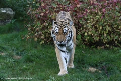 Wildpark_Lueneburger_Heide_270916_IMG_1532