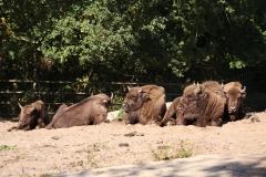 Wildpark_Lueneburger_Heide_270916_IMG_0811