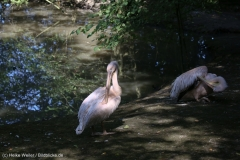 Wildpark_Lueneburger_Heide_270916_IMG_0817