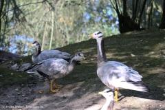 Wildpark_Lueneburger_Heide_270916_IMG_0819