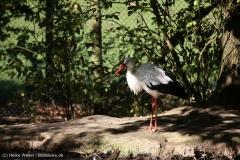 Wildpark_Lueneburger_Heide_270916_IMG_0821