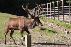Wildpark_Lueneburger_Heide_270916_IMG_0849