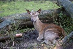 Wildpark_Lueneburger_Heide_270916_IMG_0867