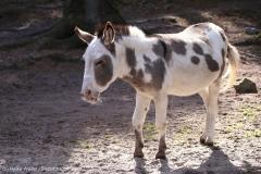 Wildpark_Lueneburger_Heide_270916_IMG_0868