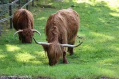 Wildpark_Lueneburger_Heide_270916_IMG_0872