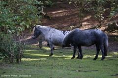 Wildpark_Lueneburger_Heide_270916_IMG_0881
