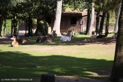 Wildpark_Lueneburger_Heide_270916_IMG_0883