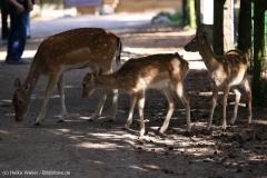 Wildpark_Lueneburger_Heide_270916_IMG_0885