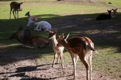 Wildpark_Lueneburger_Heide_270916_IMG_0889