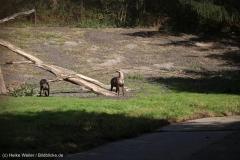 Wildpark_Lueneburger_Heide_270916_IMG_0896