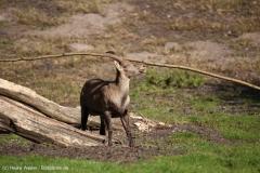 Wildpark_Lueneburger_Heide_270916_IMG_0899
