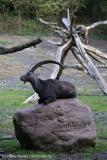 Wildpark_Lueneburger_Heide_270916_IMG_0916