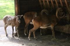 Wildpark_Lueneburger_Heide_270916_IMG_0930