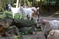 Wildpark_Lueneburger_Heide_270916_IMG_0938