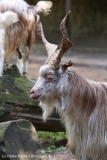 Wildpark_Lueneburger_Heide_270916_IMG_0939