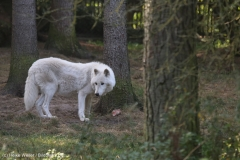 Wildpark_Lueneburger_Heide_270916_IMG_1027