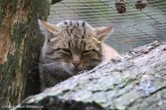 Wildpark_Lueneburger_Heide_270916_IMG_1041