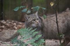 Wildpark_Lueneburger_Heide_270916_IMG_1059